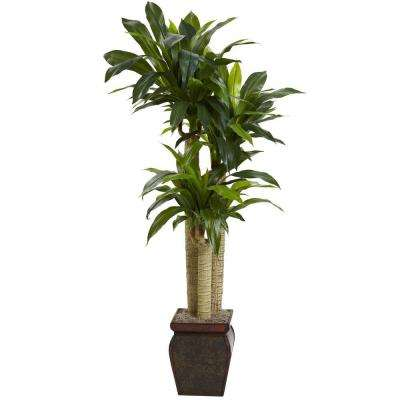 4.5 ft. Cornstalk Dracaena with Vase (Real Touch)