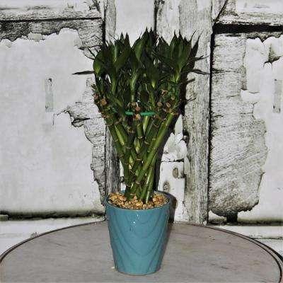 Medium Lucky Bamboo Tunnel Braid in 4.5 in. Samba Diamond Turquoise Ceramic