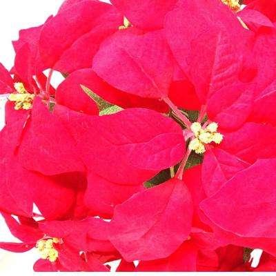 21 in. Unlit Silk Poinsettia Arrangement (6-Pack)