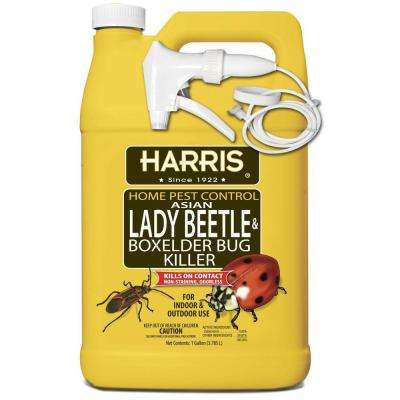 1 gal. Asian Lady Beetle and Box-Elder Bug Killer