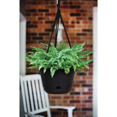 13 x 8.75 Chocolate Lucca Plastic Self Watering Hanging Basket