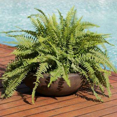 Percival 21 in. Sable Poly Outdoor Flower Pot Planter (4-Pack)