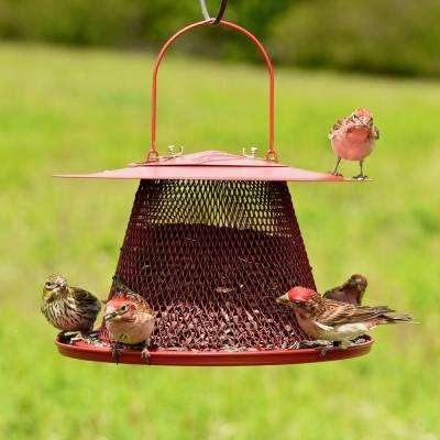 Red Cardinal Hanging Bird Feeder - 2.5 lb. Capacity