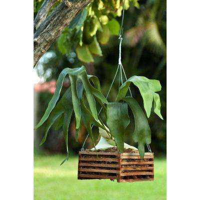 6 in. Wooden Square Hanging Baskets (2-Pack)