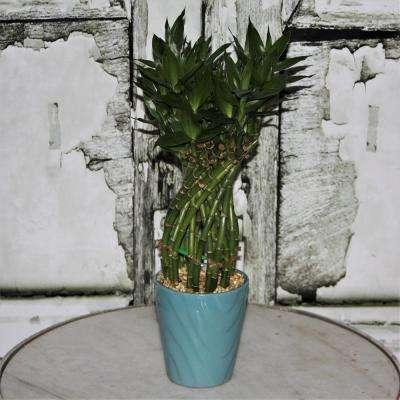 Medium Lucky Bamboo Flower Braid in 4.5 in. Samba Horizontal Turquoise Ceramic