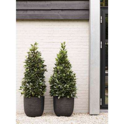 13.77 in. x 13.88 in. Black Plastic and Wood Fiber Row Planter