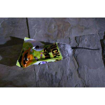 3 in. Animated Hungry Rat in Trick or Treat Bag