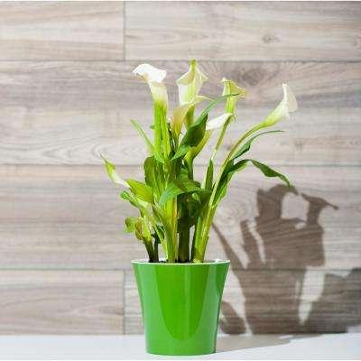 Arte 8.6 in. Green-Gold/White plastic Self Watering Planter