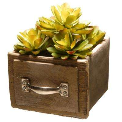 7 in. and 8 in. Succulent in a Cement Pot (Set of 2)