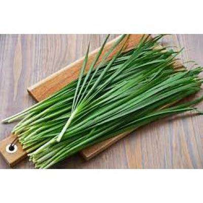 Herb Plant Onion Chives in 6 In. Deco Pot