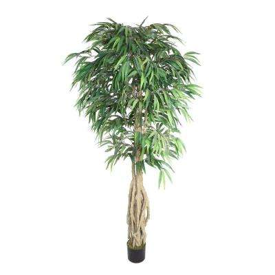 38 in. x 38 in. x 78 in. H Willow Ficus with Multiple Trunks