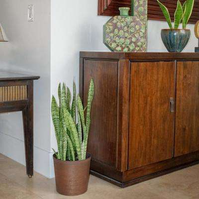 Sansevieria Zeylanica Plant in 9.25 in. Grower Pot