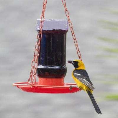 Oriole Jelly Hanging Bird Feeder - 32 oz. Capacity