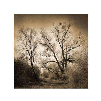 18 in. x 18 in. Sepia Ghost Canvas Art