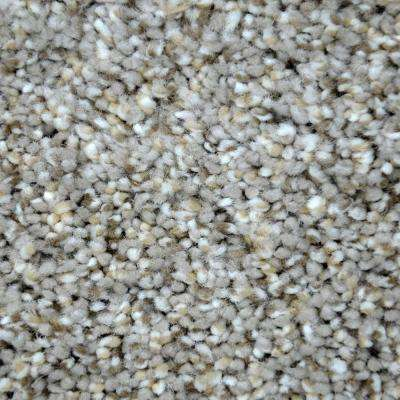 Carpet Sample - Graceful Style II - Color Hartford Texture 8 in. x 8 in.