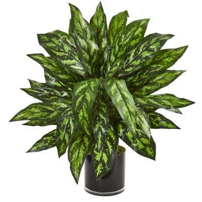 Indoor Silver King Artificial Plant in Black Glass Vase