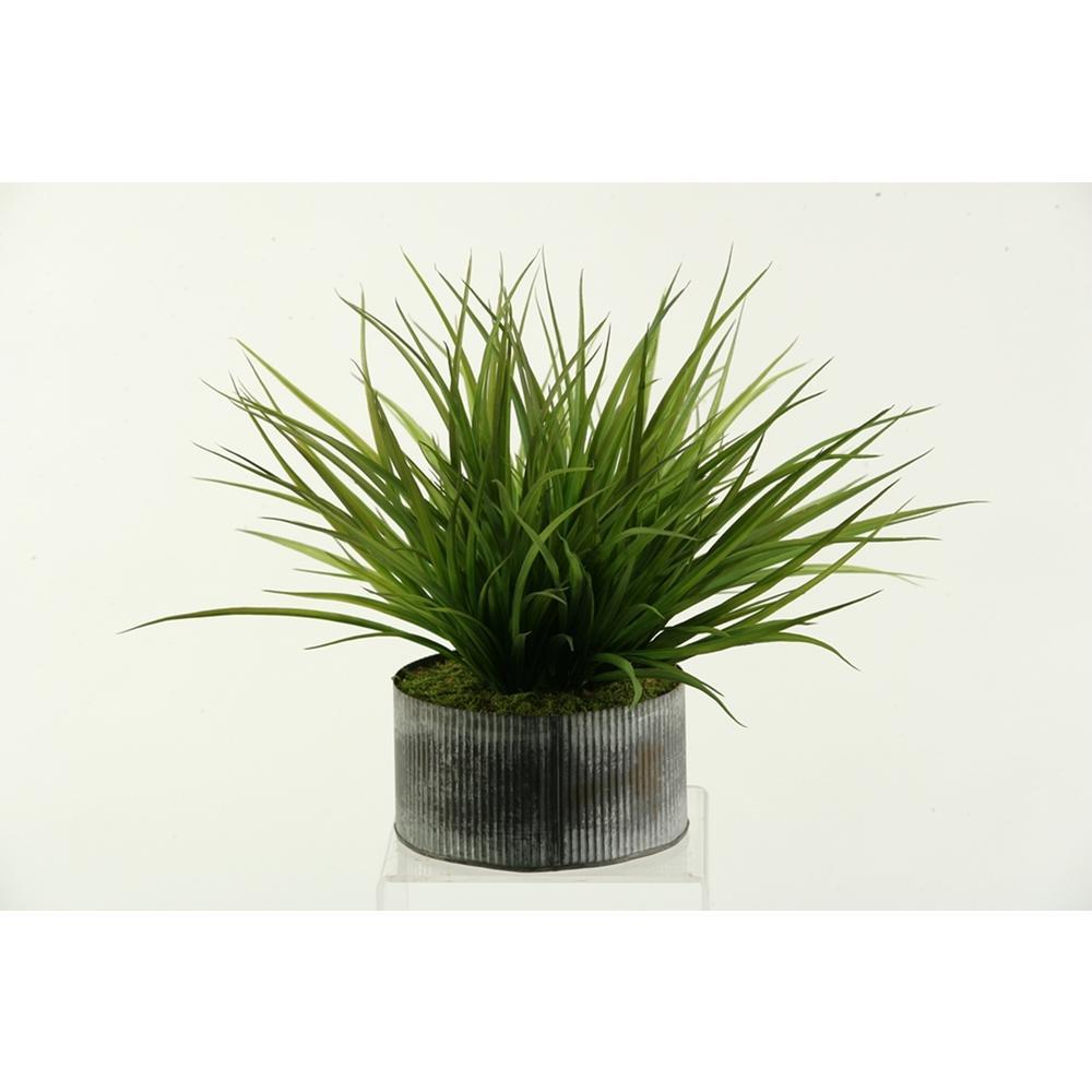 Indoor Wild Grass in Round Tin Planter