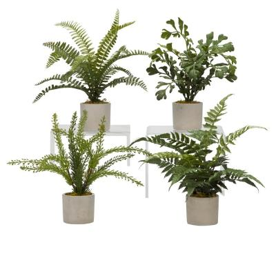 Indoor Assorted Mini Ferns in Mini Cement Sylinder (Set of 4)