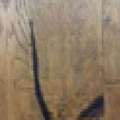 Wire Brushed Dawn Oak 3/8 in. T x 7.5 in. Wx Varying Length Click Lock Engineered Hardwood Flooring (30.92 sq. ft./case)