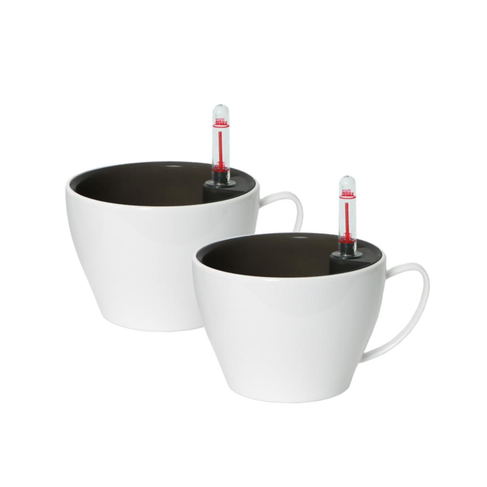 Modena 5.5 in. Cappuccino Cup Gloss White Plastic Planters (Pack of