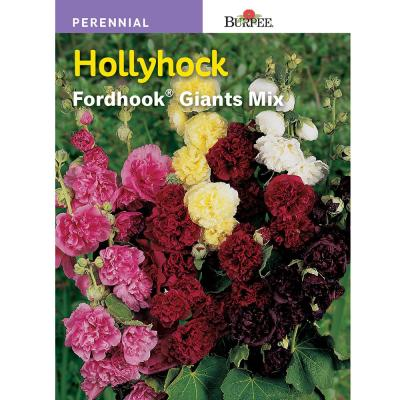 Hollyhock Fordhook Giants Mix Seed
