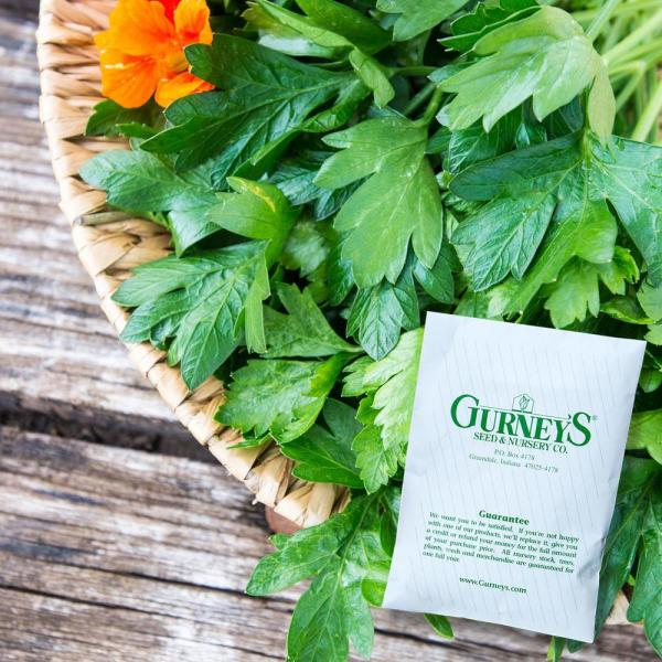 Herb Italian Parsley (600 Seed Packet)