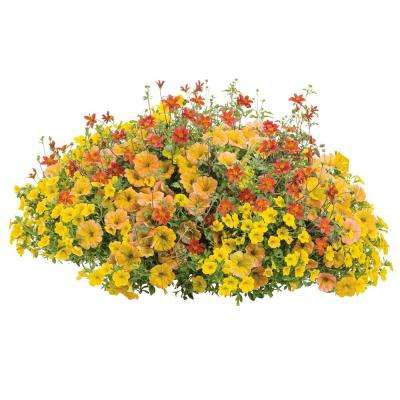 DIY Premium Hanging Basket Kit 'Honeybelle' Combination with 15 in. Container