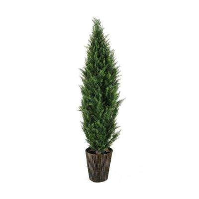 Sheppard 6 ft. Topiary