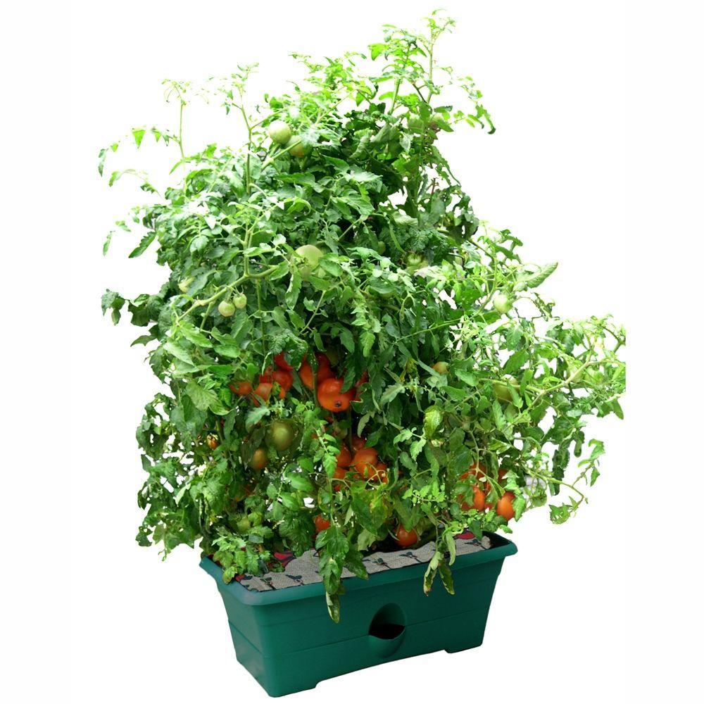 null Green 28 in. W x 13.25 in. D x 11.5 in. H Grow Box Kit