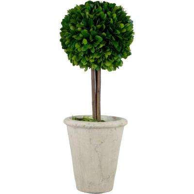 5.5 in. W x 16.5 in. H Preserved Boxwood Ball Topiary in White Terracotta Pot