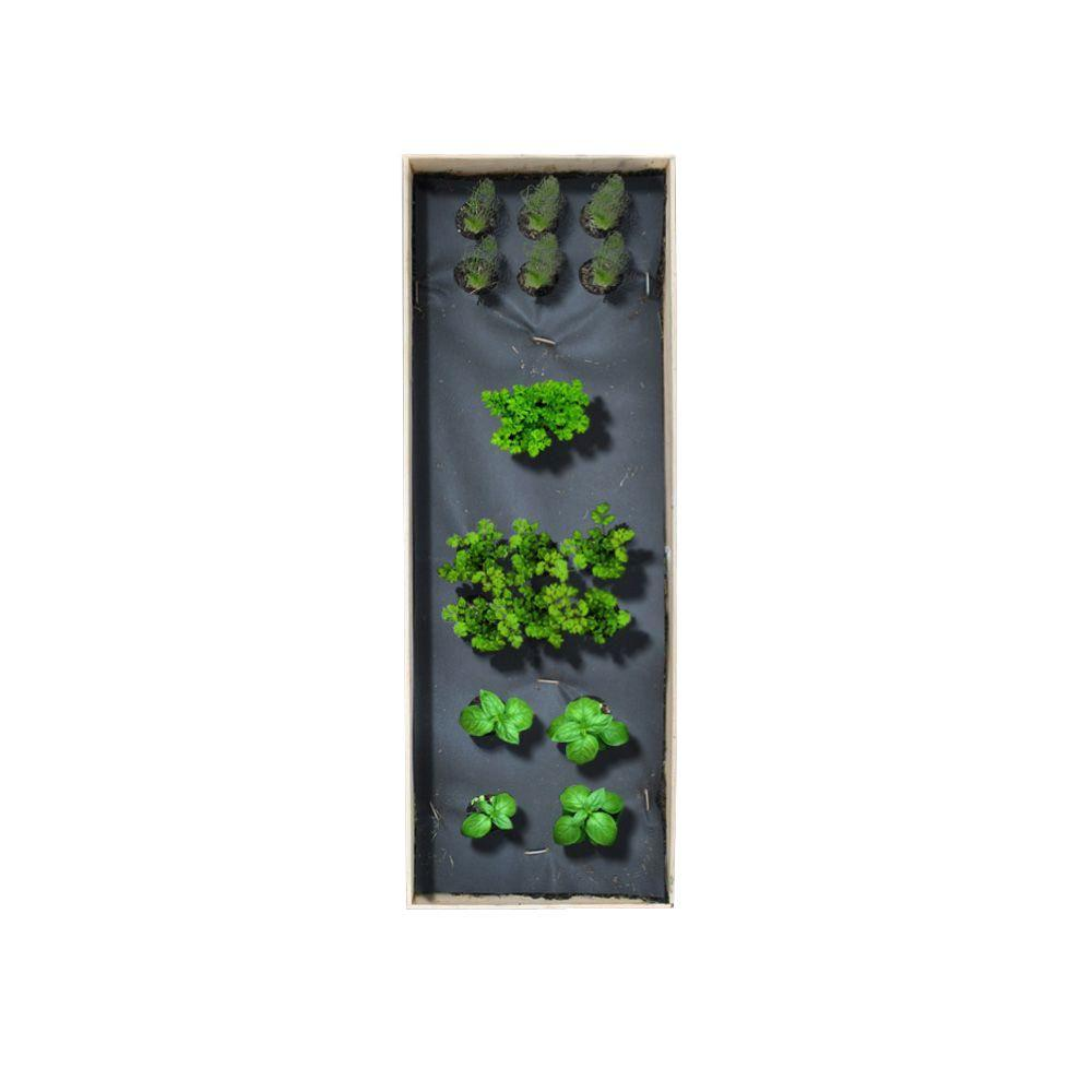Seedsheet 12 in x 36 in Herbs Garden Kit with Basil Cilantro