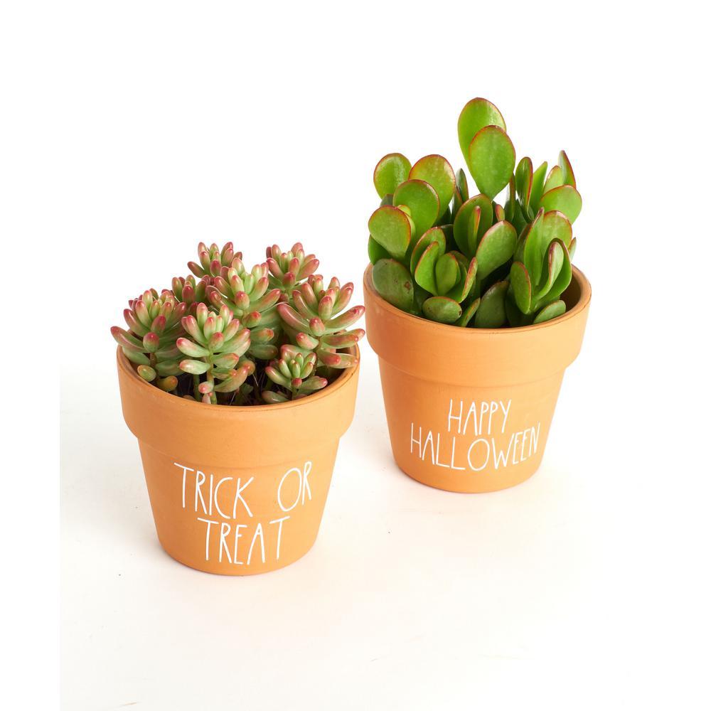 Shop Succulents Mini And Large Terrarium Duo With Air Plants