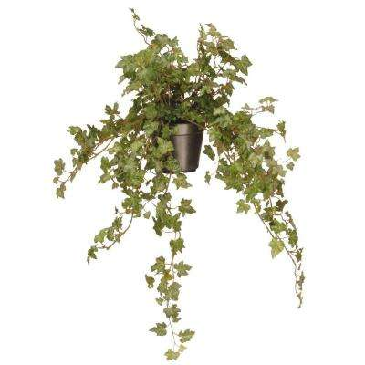 12 in. Garden Accents Ivy Plant