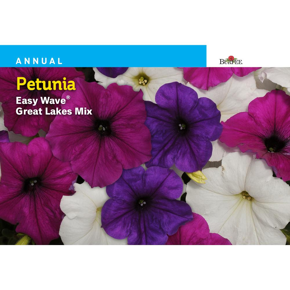 Burpee Petunia Easy Wave Great Lakes Mix Seed 45612 The Home Depot