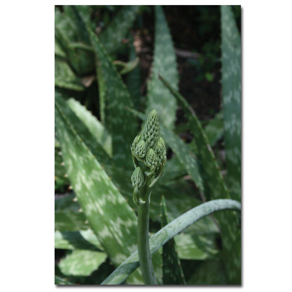 Trademark Fine Art 24 in. x 16 in. Aloe Beauty Canvas