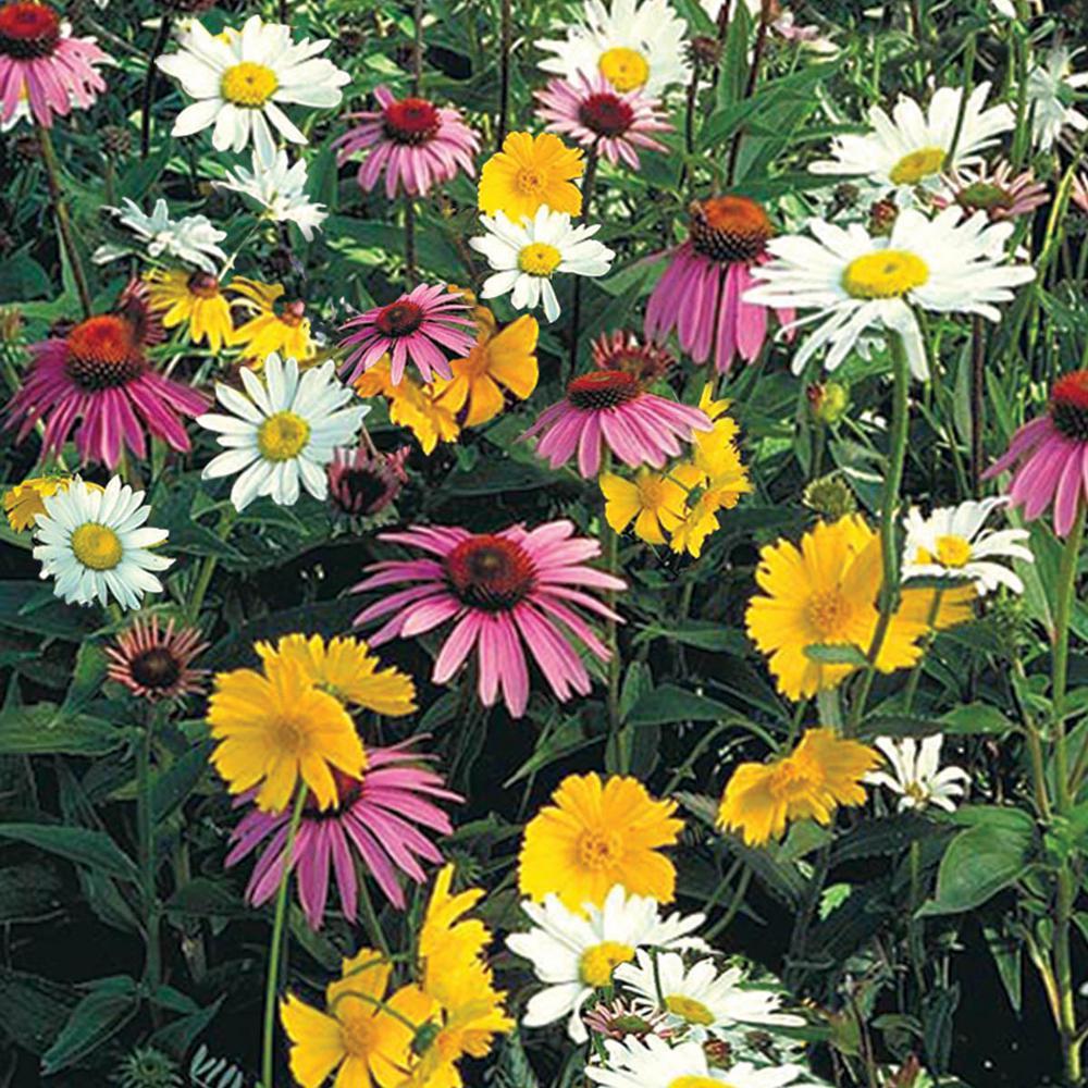 Gurney's Shade Loving Wildflower Seed Mixture (0.5 oz. Seed Packet)