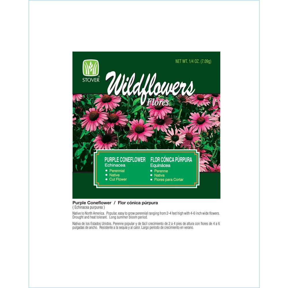 Stover Seed Purple Coneflower Echinacea Flower Seed 80001 6 The
