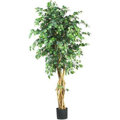 Multi-Trunk Silk Ficus Tree