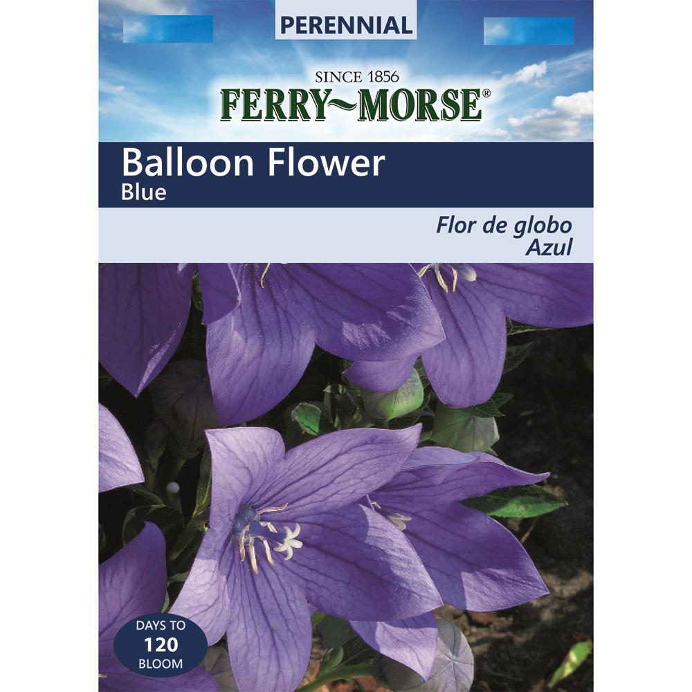 Ferry Morse Balloon Flower Blue Seed 6703 The Home Depot