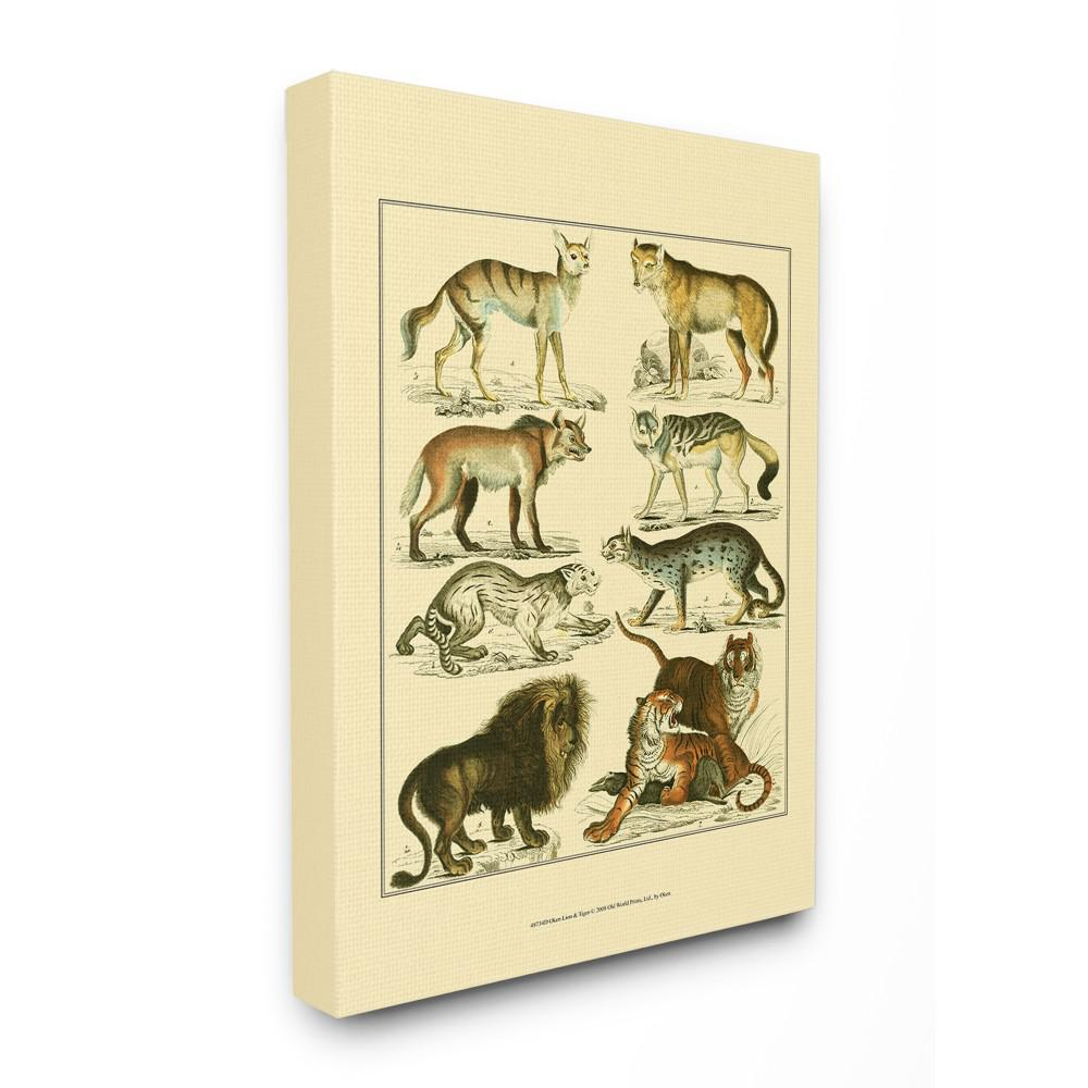 "16 in. x 20 in. ""Big Cats Wildlife Illustration"" by Oken"