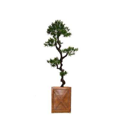 57 in. Tall Yacca Tree in Planter