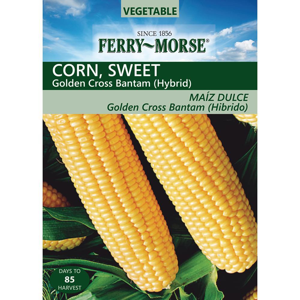 Golden X Bantam Corn Seed