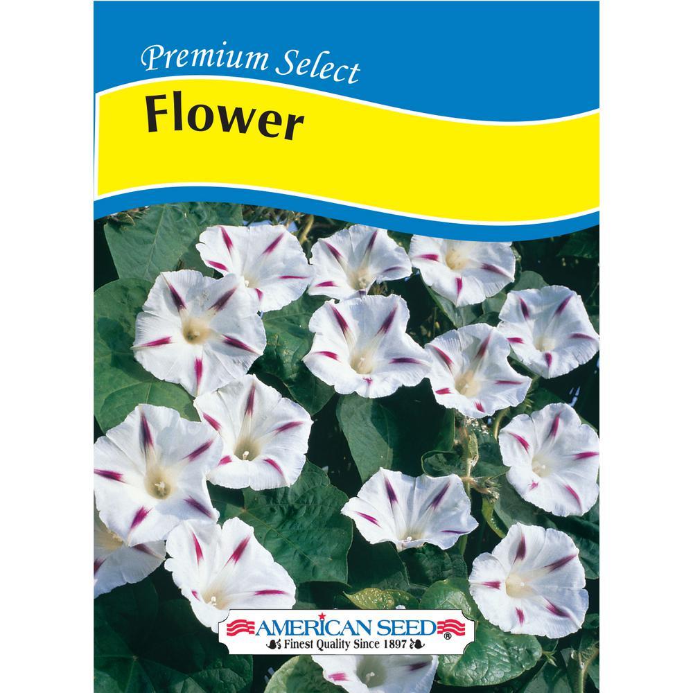 American Seed American Premium Flower Seed