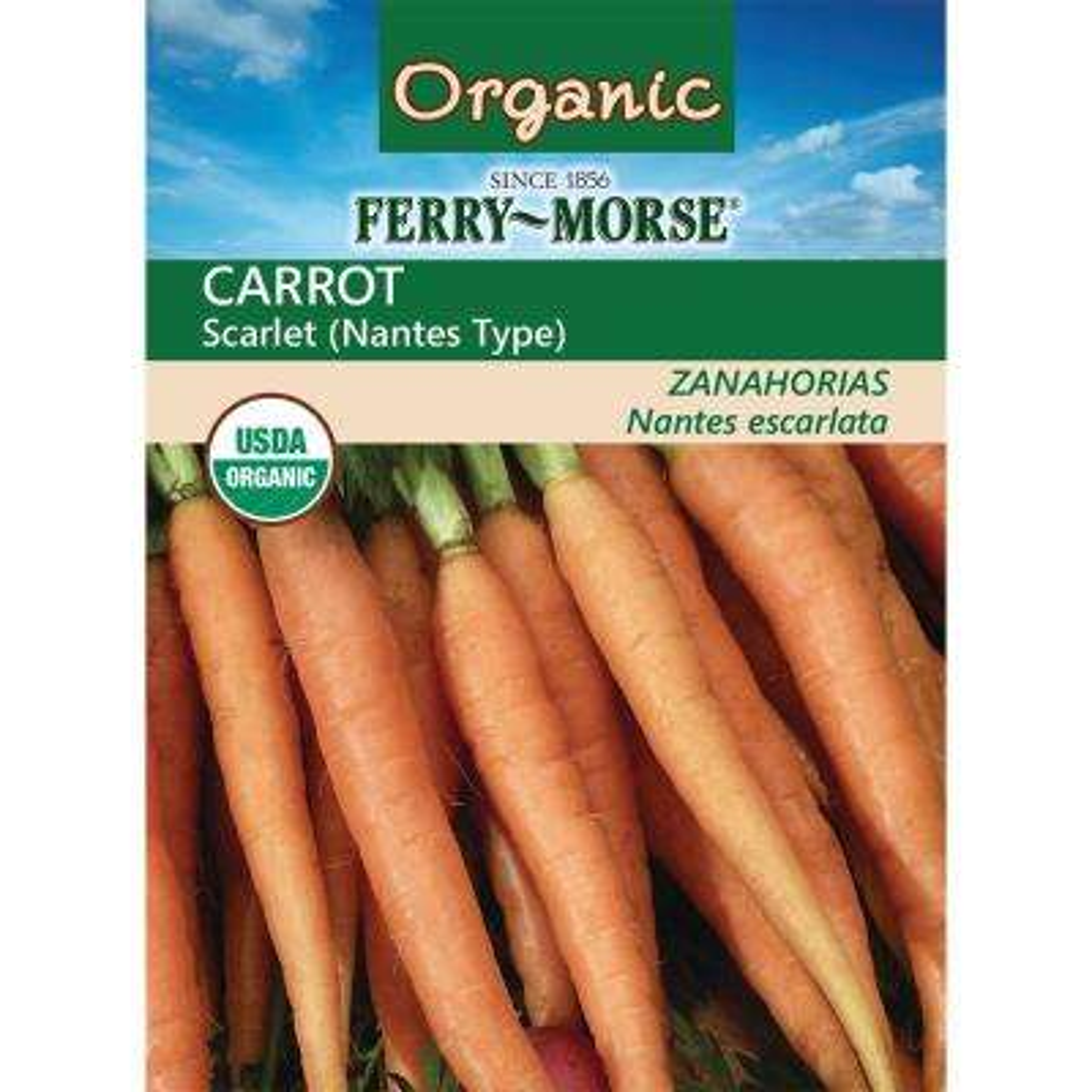 Carrot Scarlet Nantes Organic Seed