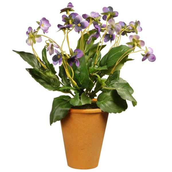 16 in. Wild Pansy Plant