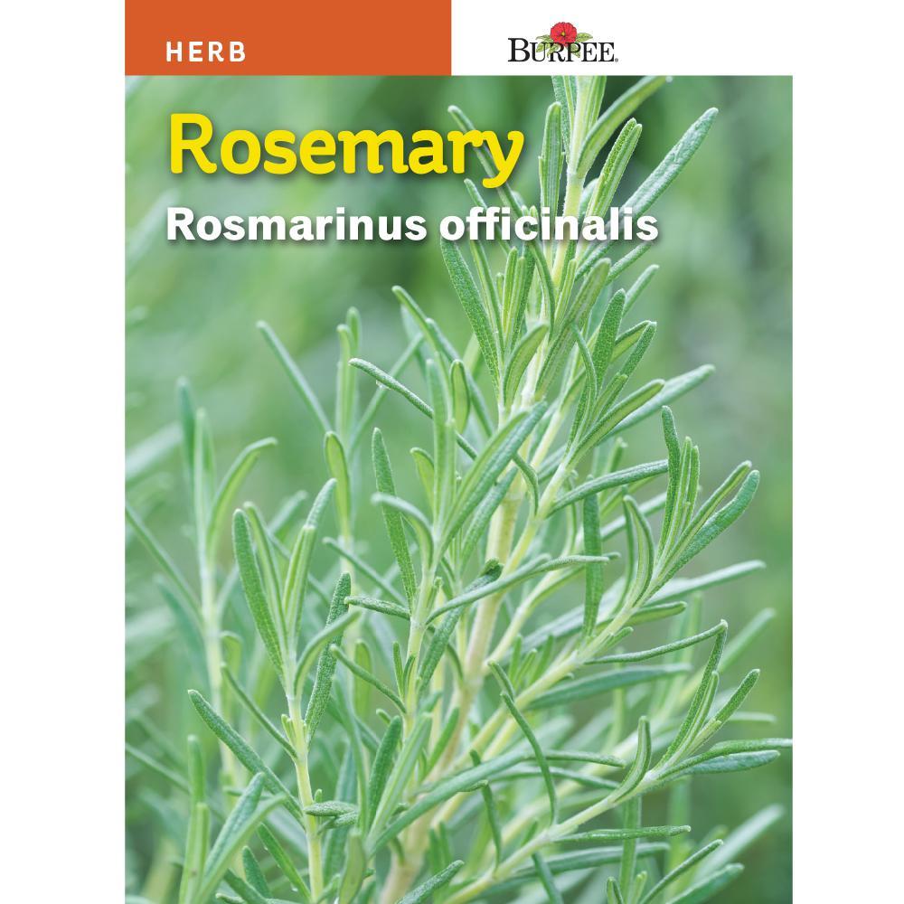 Burpee Rosemary Herb Seed