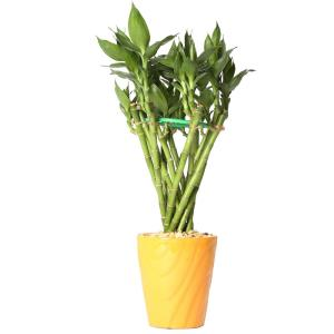 Bamboo Plant Food Home Depot