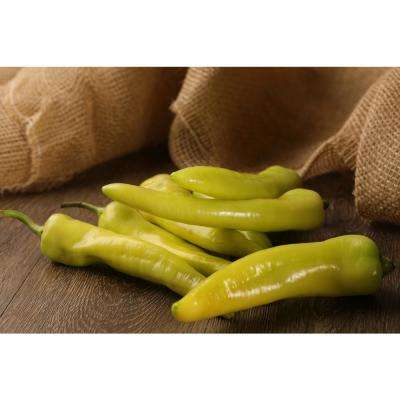 4.25 in. Grande Proven Selections Sweet Hungarian Wax Pepper Live Plant Vegetable (Pack of 4)