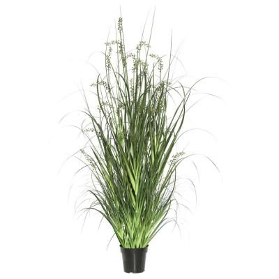 60 in. Green Sheep's Grass in Pot