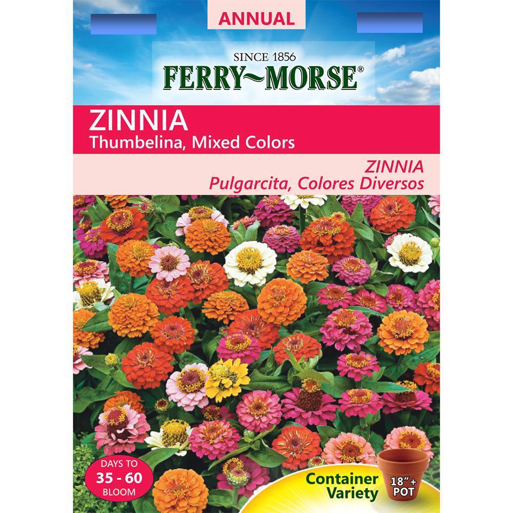 Ferry Morse Thumbelina Mixed Colors Zinnia Seed